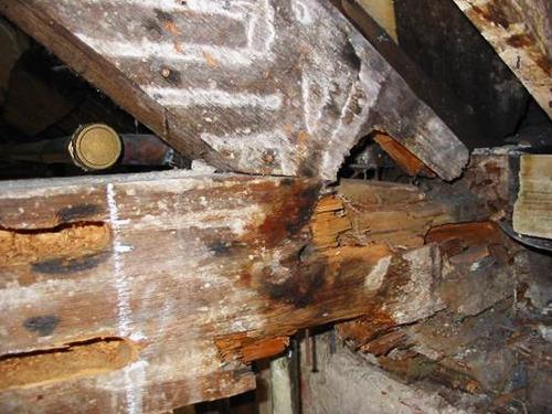 timberrepair-1