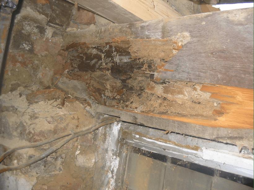 Beam in need of dry rot repair treatment.